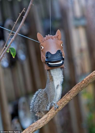 松鼠 被骗 钻入玩具 马头鼠身 笑掉大牙 大千世界