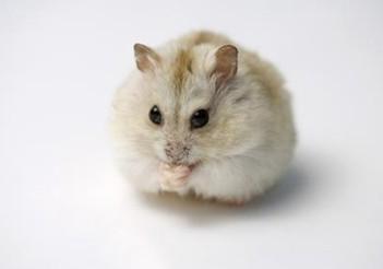 菲律宾收购老鼠 以防发生相关传染病疫情(图)