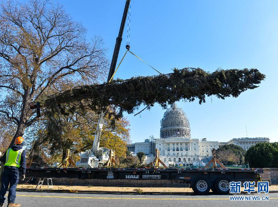 """美国国会圣诞树运抵""""安家""""(高清组图)"""
