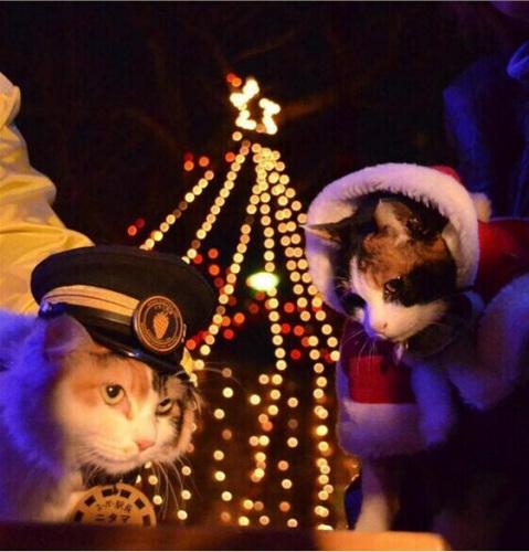 """""""猫站长""""扮成圣诞老人为车站掌灯 圣诞气氛浓郁(图)"""