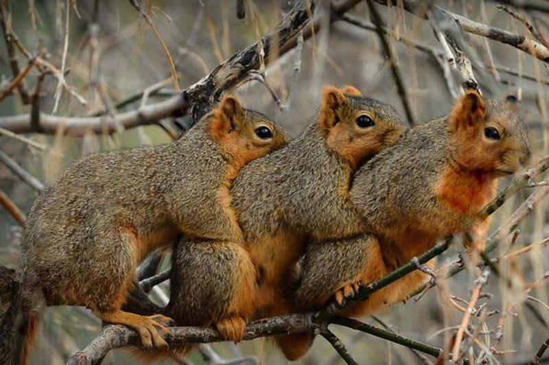 呆萌!美国3只小松鼠寒冬中拥抱取暖(高清组图)