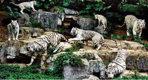 是大型的原生态动物园; 珍稀濒危动物众多,园区拥有14只大熊猫,50只