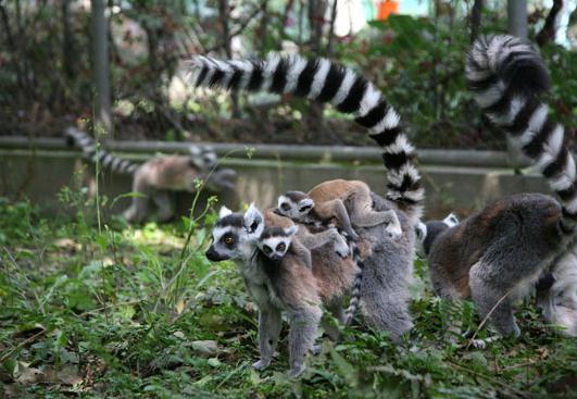 奇丽多姿 惊险有趣的动物世界 盘点七大疯狂动物城图片