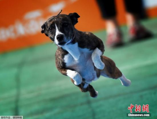 日本 宠物/资料图:宠物狗