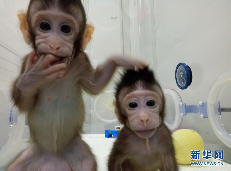 (科技)(1)世界生命科學重大突破! 兩隻克隆猴在中國誕生